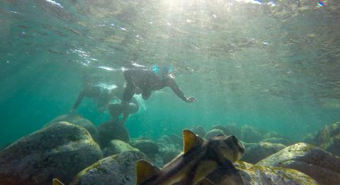 Snorkelling Tour with EcoTreasures