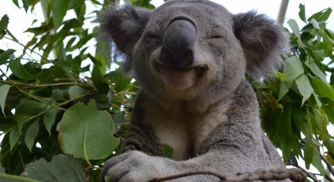 悉尼野生动物园 (WILD LIFE Sydney Zoo)