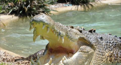 澳大利亚爬行动物园 (Australian Reptile Park)