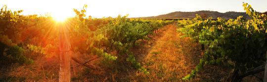 马奇 (Mudgee) 的伯恩布雷酒庄 (Burnbrae Wines)