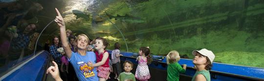 在水族馆观看海洋生物的孩子们