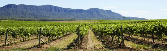 猎人谷 (Hunter Valley) 葡萄酒产区