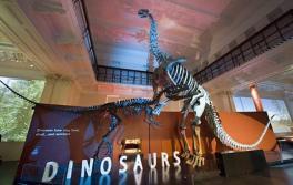 澳大利亚博物馆 (Australian Museum) 的恐龙