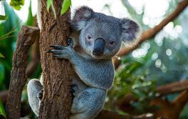 达令港 (Darling Harbour) 悉尼野生动物园 (WILD LIFE Sydney Zoo)